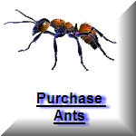 Purchase live ants